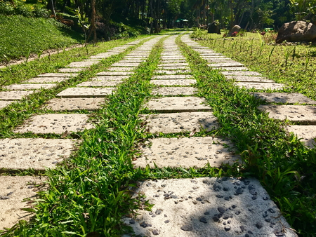 Textured path from concrete rectangular plates for walk on a tropical garden with green grass on a sunny day. Walking pathway in the park closeup. Stock Photo