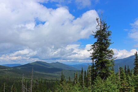Beautiful summer view to the forest and mountains. Mountain landscape in siberian taiga. Nature Park Ergaki, Russia, Siberia.