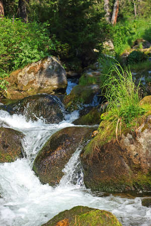 Forest creek flowing over wet rocks. Motion blur of flowing water. Waterfall or cascade on small fast river in sunny day