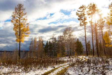 Sunlit golden autumn forest with first snow. Bright sun against the backdrop of a gloomy cloudy sky. Siberian taiga landscape Reklamní fotografie
