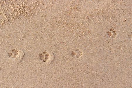 Cat paw prints on wet sand. Funny background