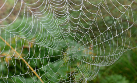 Spider cobweb decorated with pearls of rain water against a blurred green background