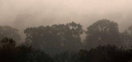 Rays of sunlight penetrate morning fog in the forest. Reklamní fotografie