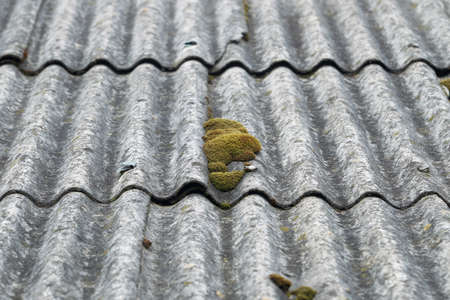 Old slate roof covered with moss and dry branches. Latvia Imagens