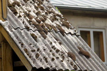 Old slate roof covered with moss and dry branches. Latvia
