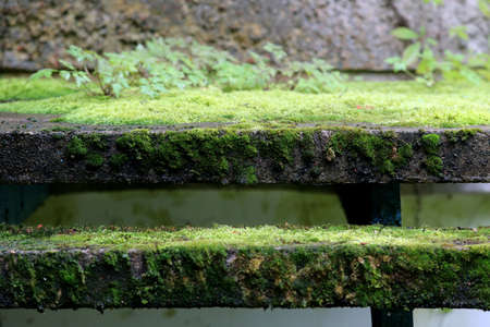 Old concrete stairs overgrown with grass in Nida Lithuania