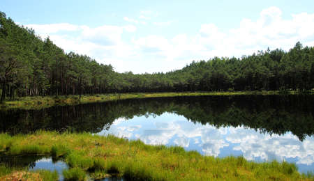 Landscape with trees and a small lake. Lithuania