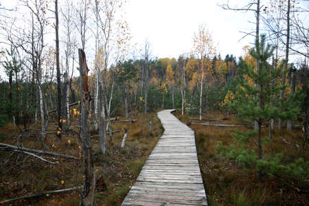 Wooden trail through the wetland to protect the environment from damage, Kaunas district, Dubrava cognitive trail