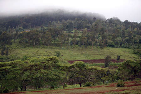 Rain forest - Ngorongoro national park 免版税图像