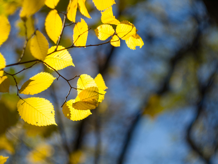 yellowed: Yellowed leaves  October  Stock Photo