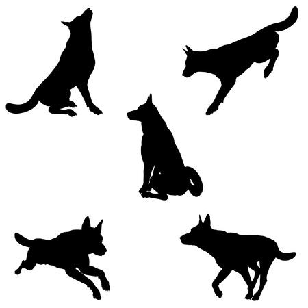 pastorcillo: Ilustraciones negras de la silueta de un perro pastor alemán pastor alemán en varias poses sobre un fondo blanco Foto de archivo