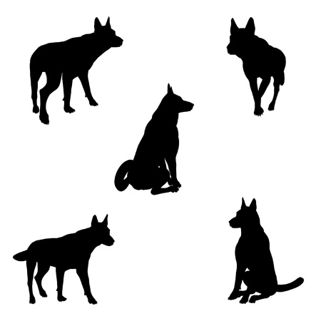 Black silhouette illustrations of an Alsatian  German Shepherd  dog in various poses on a white background illustration