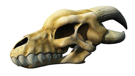 eye sockets: Horned Dragon skull isolated on white, 3d digitally rendered illustration
