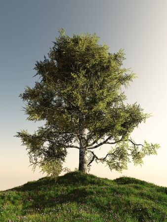 hillock: Solitary birch tree standing on a grassy hill, 3d digitally rendered illustration