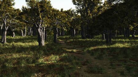 secluded: Illustration of a peaceful and secluded woodland path in sunlight, 3d Digitally rendered illustration