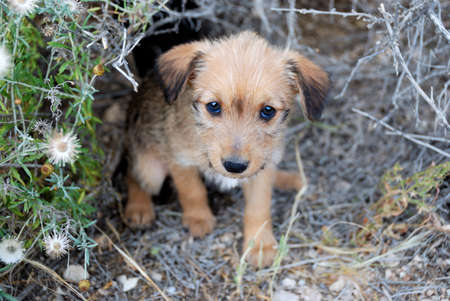 Sad lonely homeless puppy looking in the eyes photo