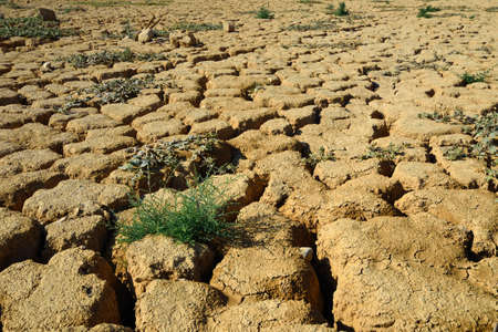 Dry cracked ground and green plants. Taken in Negev, Israel. photo
