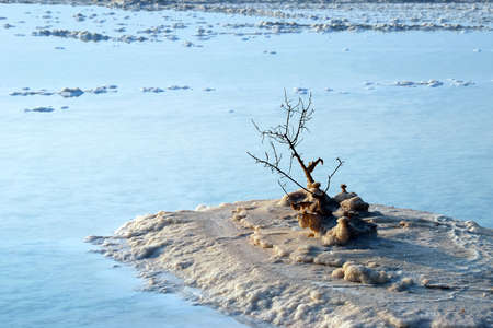hydrochloric: Hydrochloric outgrowths on the coast of Dead Sea Stock Photo
