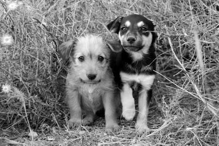 Sad homeless puppies looking in the eyes. B&W photo