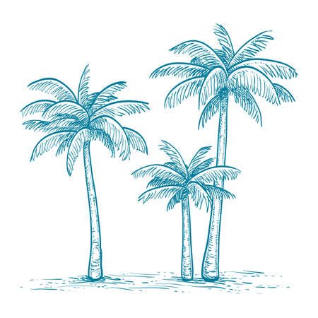 seacoast: Hand drawn vector illustration of palm trees  isolated on white background. Sketch. Retro style.