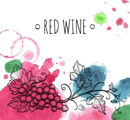 Wine background. Hand drawn vector illustration of grapes. Watercolor stains.