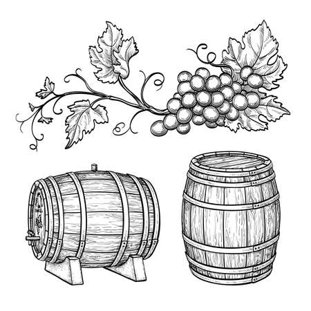 Grape branches and wine barrels. Isolated on white background. Hand drawn vector illustration