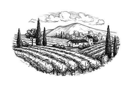 winemaking: Hand drawn vineyard landscape. Isolated on white background. Vintage style vector illustration.