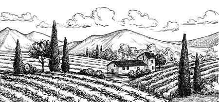 Hand drawn vineyard landscape. Isolated on white background. Vintage style vector illustration.