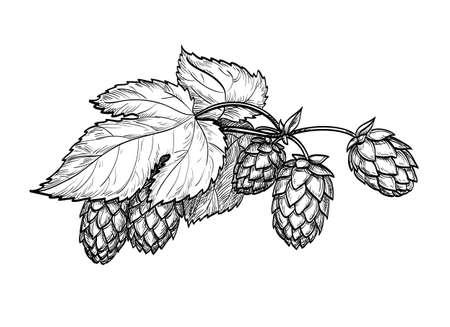 Hand getrokken vectorillustratie van hop. Geïsoleerd op witte achtergrond Hand getrokken vectorillustratie. Retro stijl.