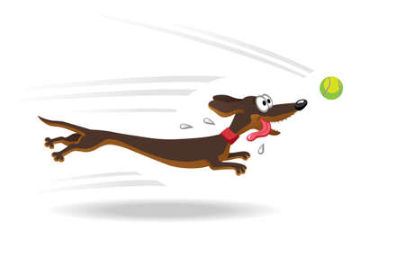doggie: Dachshund dog running for tennis ball. Vector illustration. Isolated on white background. Illustration