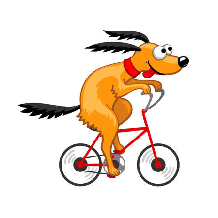 Cute dog riding a bicycle.  Vector illustration. Isolated on white background. Illustration