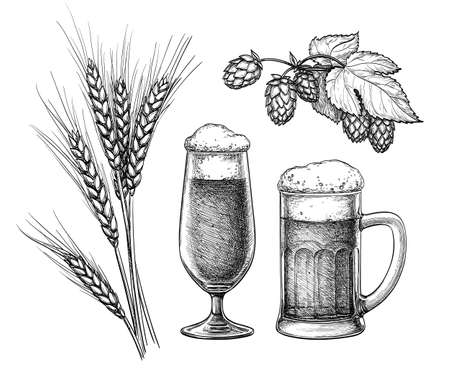 Hops, malt, beer glass and beer mug. Isolated on white background. Hand drawn vector illustration. Retro style.