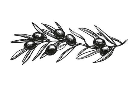 Ilustracja wektora gałązką oliwną