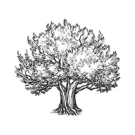 ilustración vectorial de olivo
