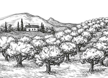 Olive grove landscape Stock Illustratie
