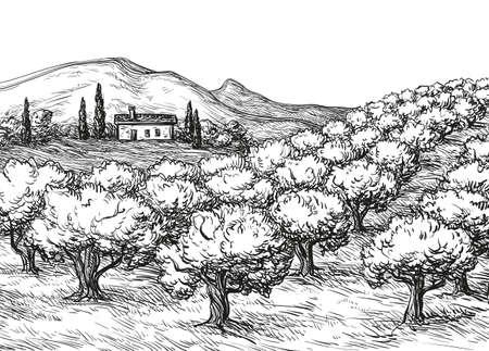 Olive grove landscape Ilustração