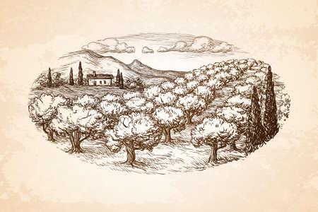 Dibujado a mano paisaje olivar. Ilustración de vector