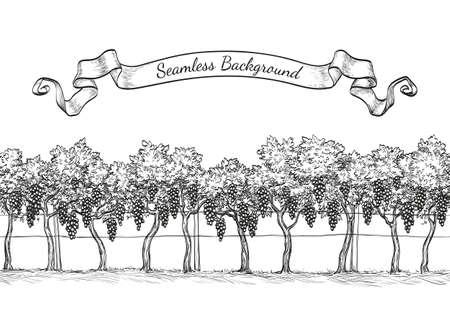Vineyard seamless background. Vektoros illusztráció