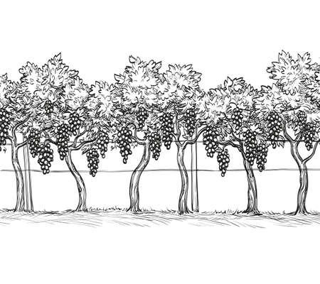 Hand drawn vector illustration of vineyard.