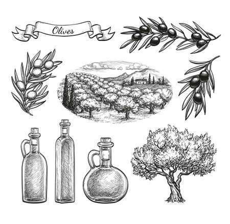 Dibujado a mano conjunto de oliva.
