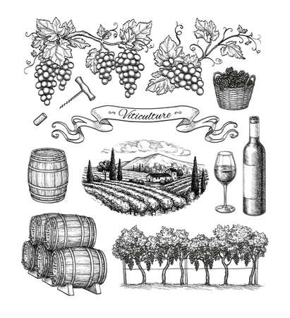 Viticulture big set. Stock Illustratie