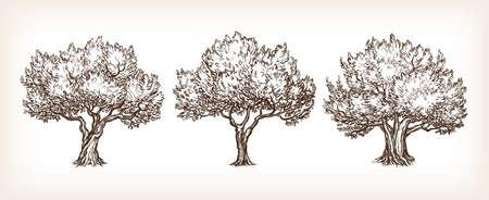 Schets set olijfbomen. Stockfoto - 73094195