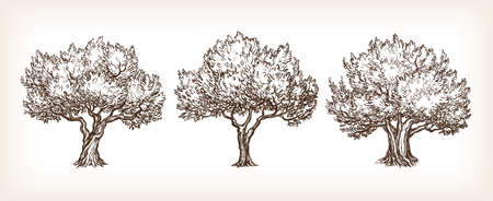 Schets set olijfbomen.