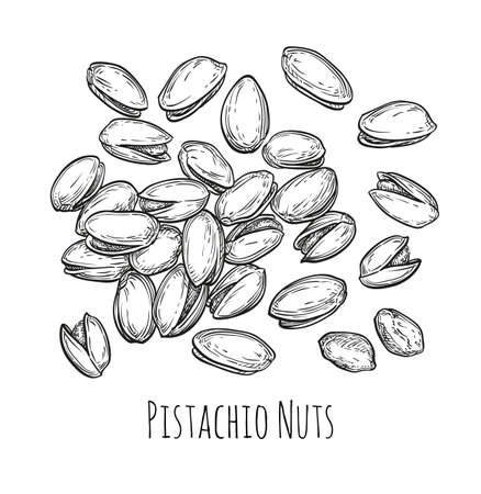 Handful of pistachio nuts. Vector illustration of nuts isolated on white background. Vintage style. Illustration