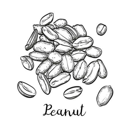 Handful of peanut. Vector illustration of nuts isolated on white background. Vintage style.