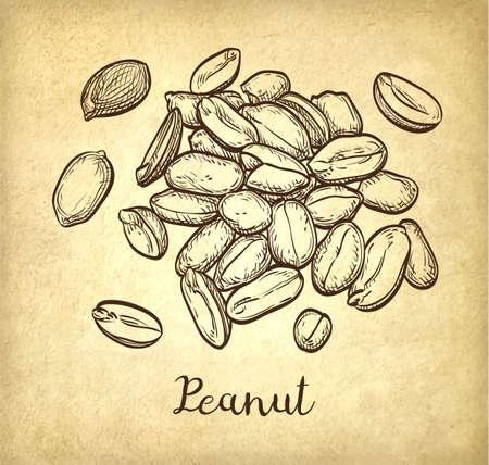 Handful of peanut. Ilustrace
