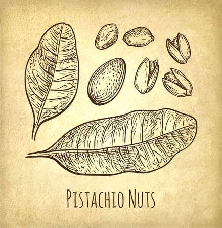 phytology: Pistachio nuts set.