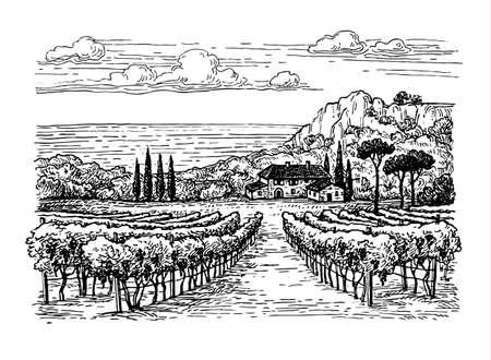 Hand gezeichnete Weinberg Landschaft. Standard-Bild - 77621703