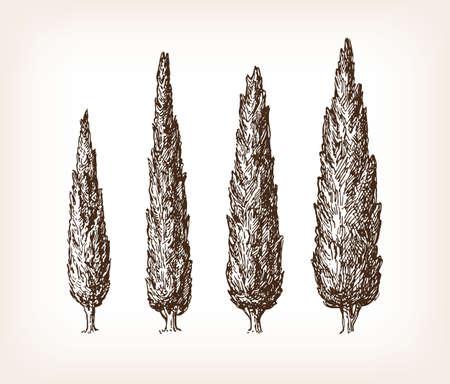 Hand drawn vector illustration of cypresses Illustration