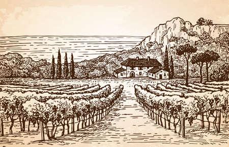 手は、古い紙の背景にブドウ園の景色を描いた。田園風景。ビンテージ スタイルのベクトル図です。